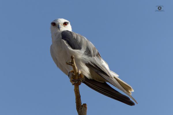 Image of Falconiformes, Accipitridae, Beak, Bird, Sky etc.