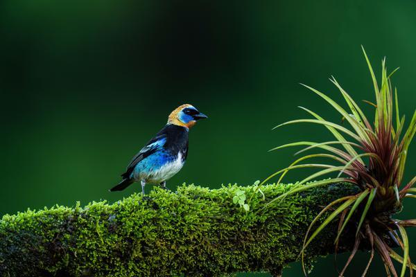 Image of Blue, Green, Beak, Bird etc.