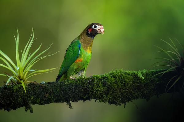 Image of Wildlife, Parrot, Green, Nature, Beak, Vertebrate etc.