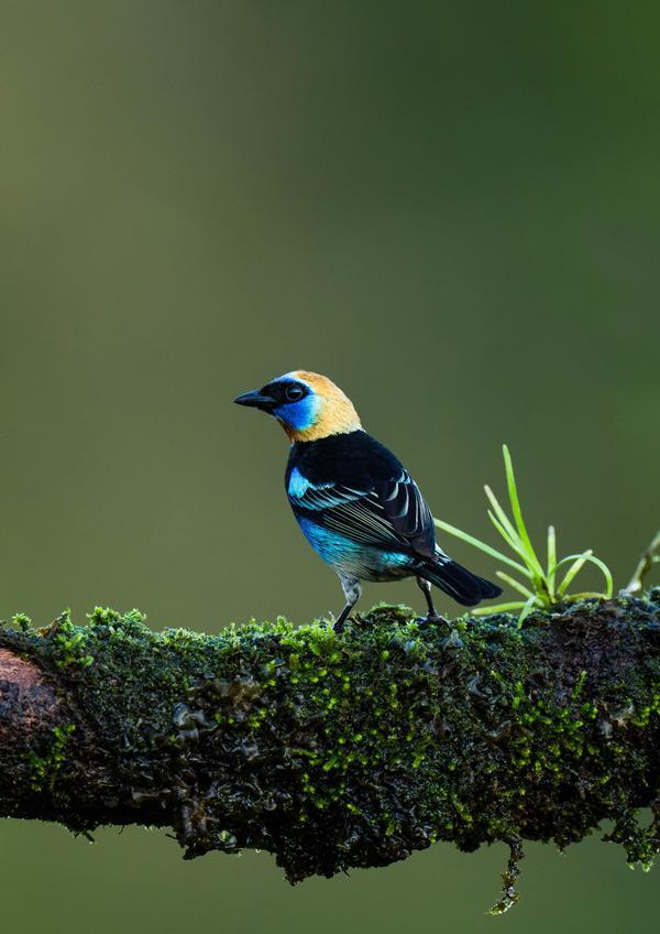 Image of Wildlife, Blue, Beak, Vertebrate, Bird etc.