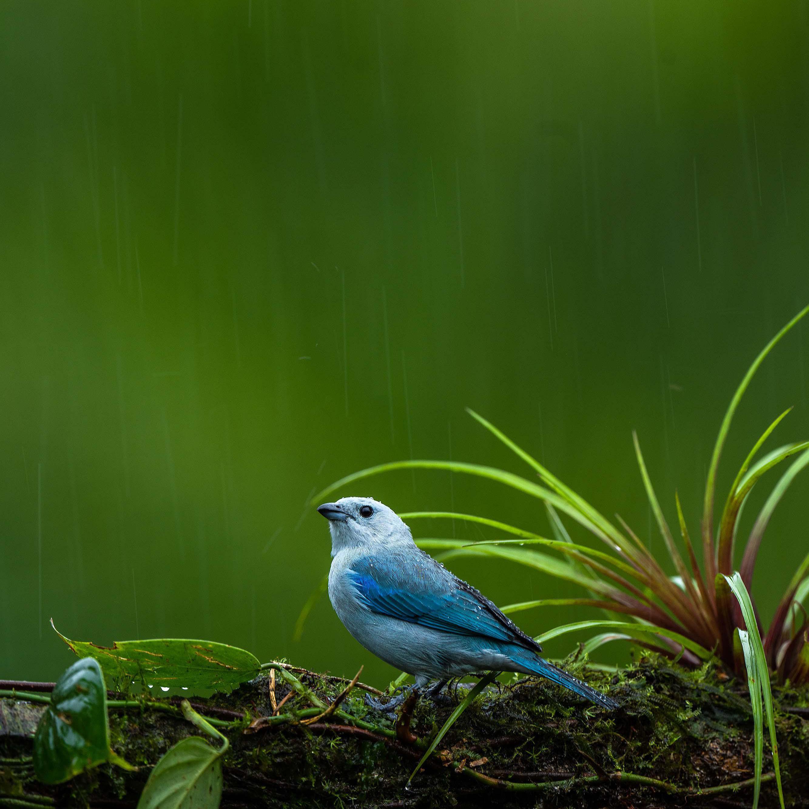 Image of Bluebird, Wildlife, Green, Blue, Beak, Nature etc.