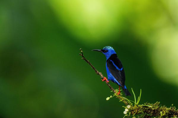 Image of Bird, Nature, Beak, Green, Blue, Wildlife etc.