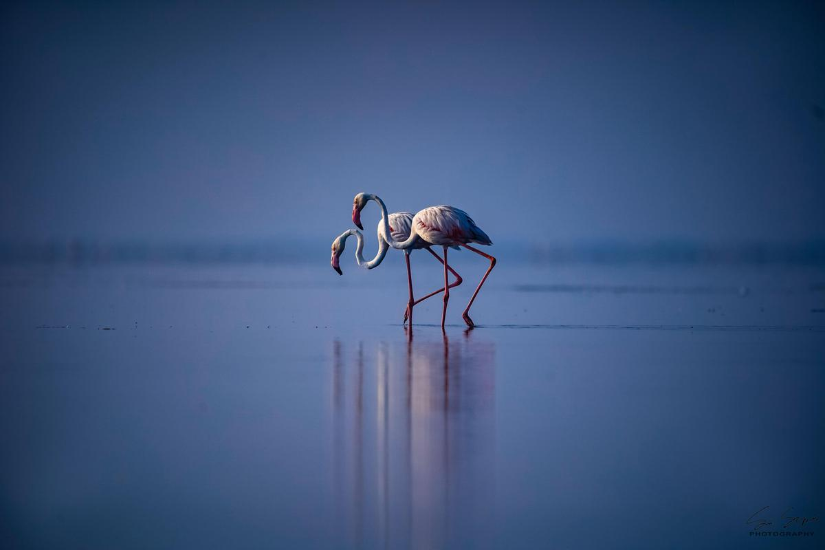 Image of Sky, Water, Wildlife, Reflection, Bird, Water bird etc.