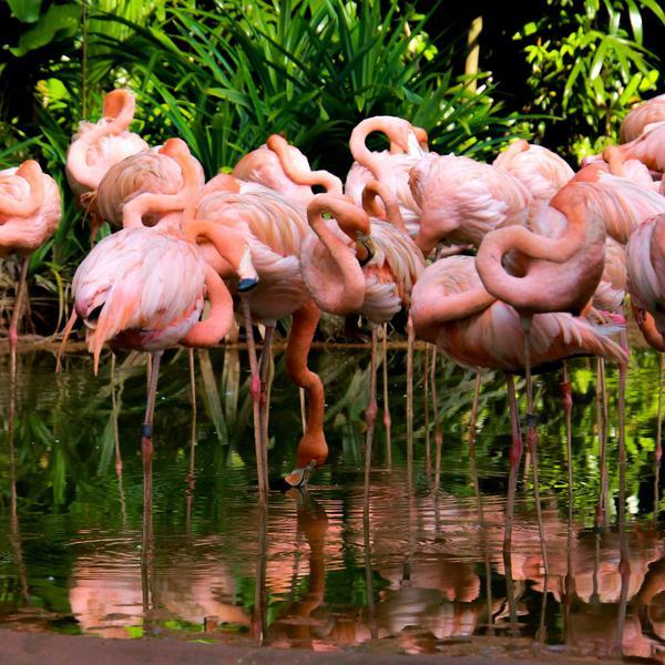 Image of Flamingo, Greater flamingo, Bird, Water bird, Pink, Wildlife etc.
