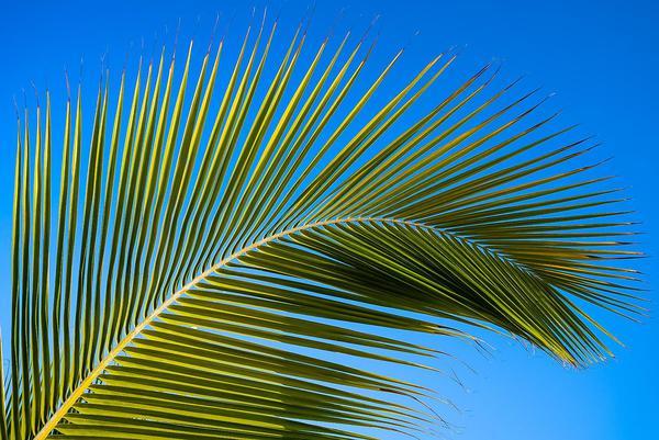 Image of Blue, Tree, Sky, Leaf, Arecales, Palm tree etc.