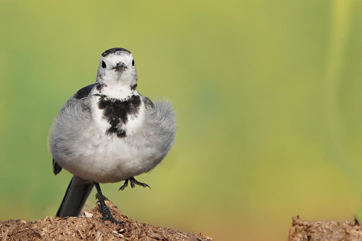 Image of Bird, Vertebrate, Beak, Wildlife etc.