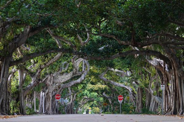 Image of Tree, Vegetation, Woody plant, Plant, Road, Botany etc.