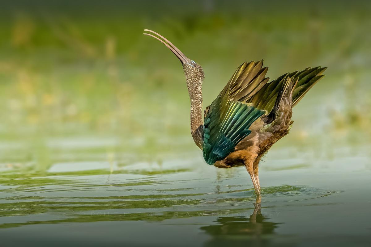 Image of Bird, Nature, Beak, Water, Wildlife etc.