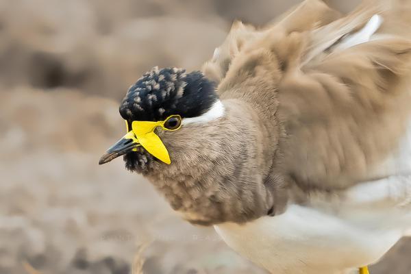 Image of Bird, Vertebrate, Beak, Wildlife, Close-up etc.