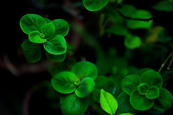 Image of Terrestrial plant, Flower, Petal, Green, Photograph, Plant etc.