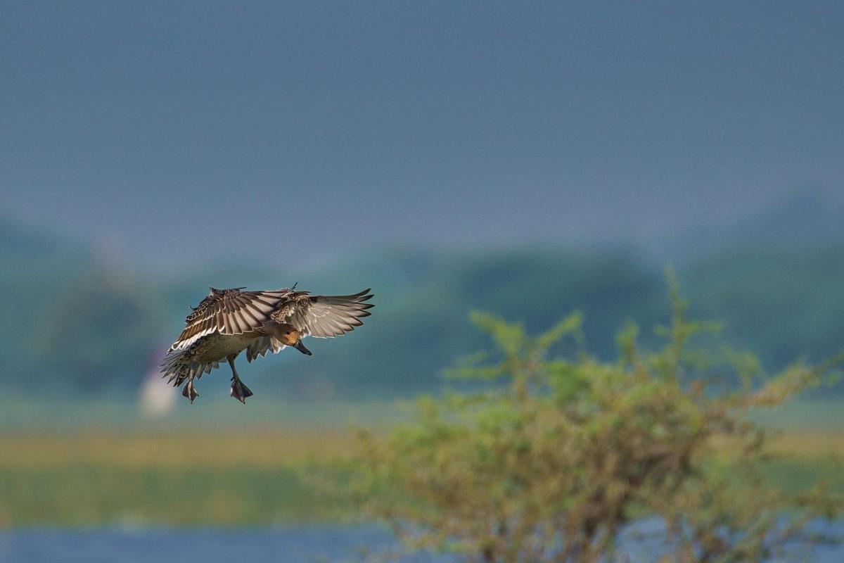 Image of Bird, Beak, Wildlife, Osprey, Sky, Bird of prey etc.