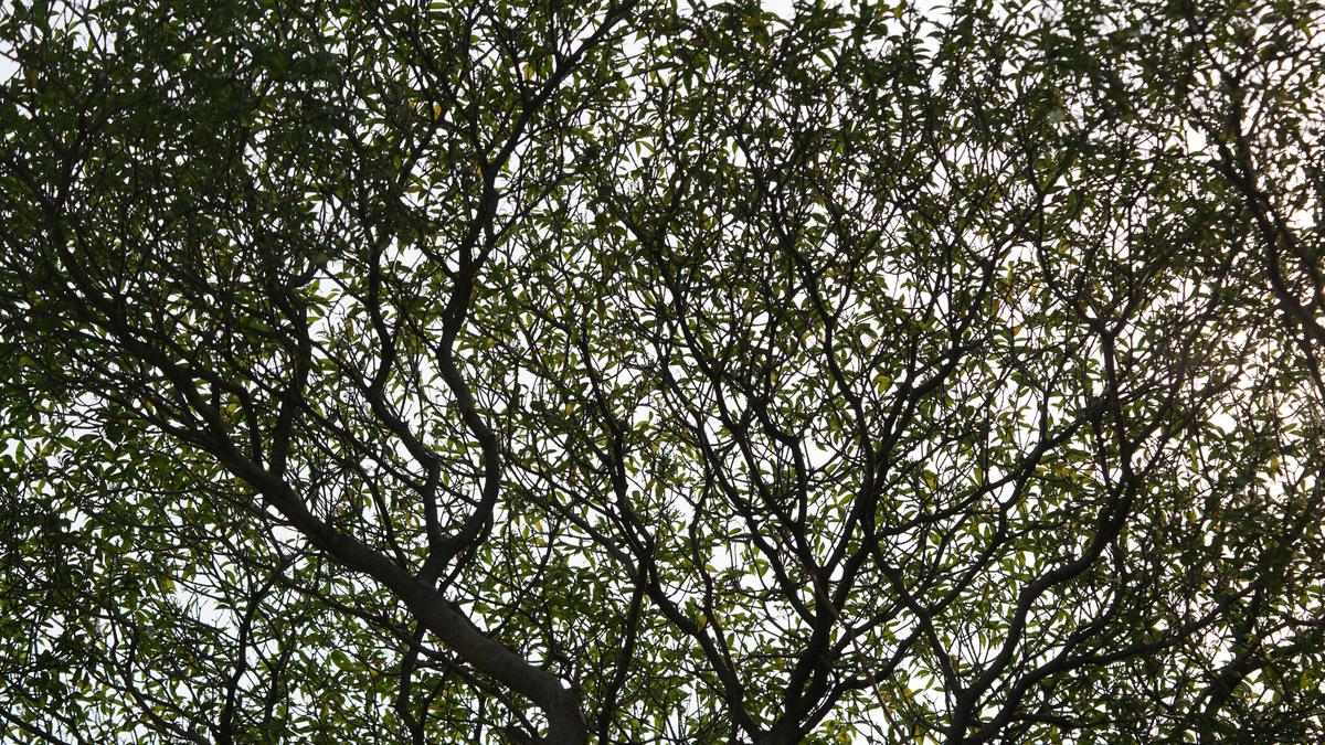 Image of Spring, Leaf, Plant, Vegetation, Woody plant, Green etc.