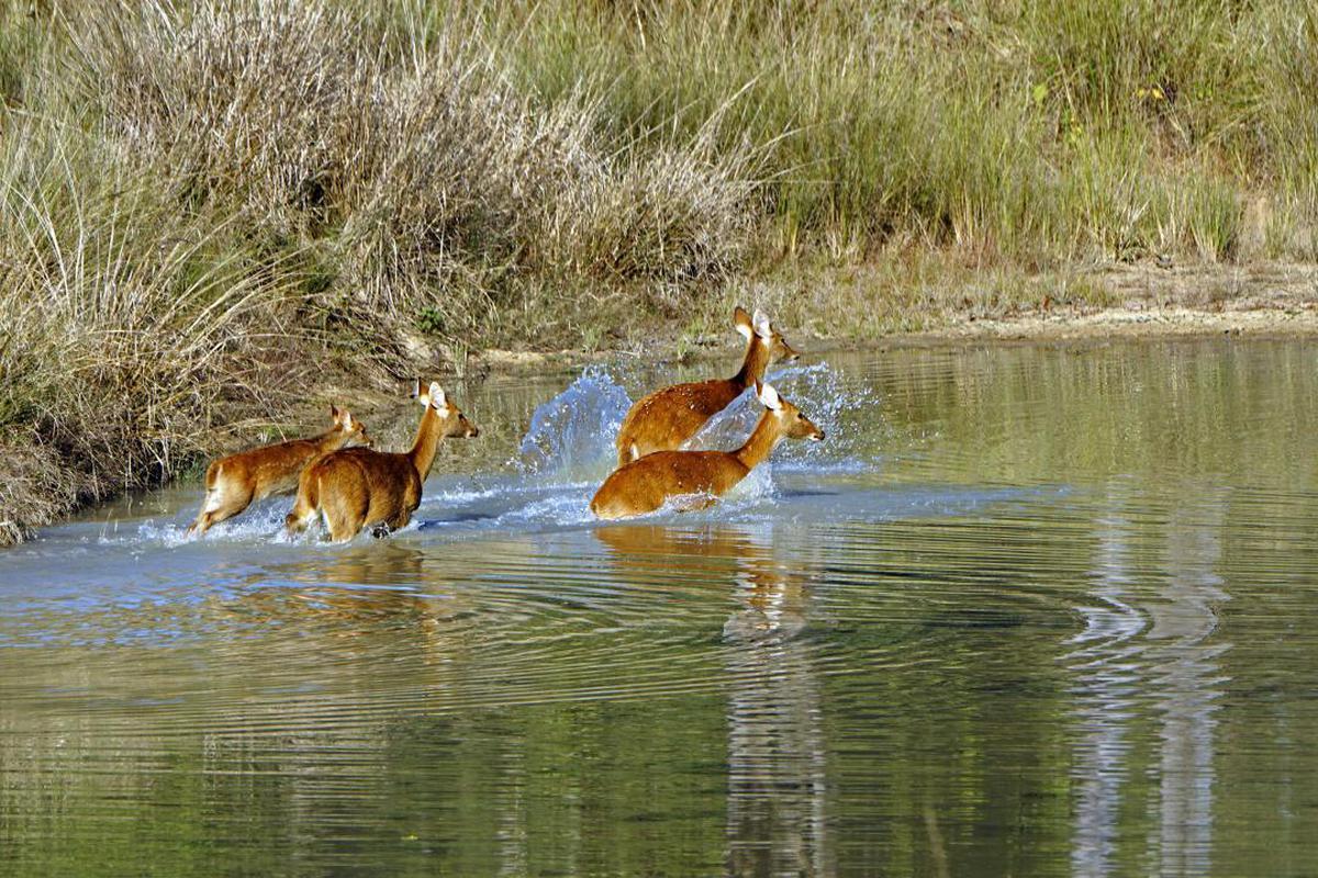 Image of Wildlife, Canidae etc.