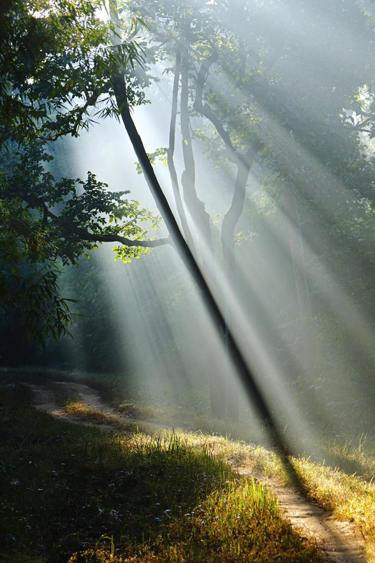 Image of Nature, Sunlight, Atmospheric phenomenon, Tree, Light, Natural environment etc.