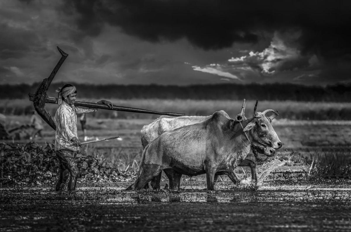 Image of Black-and-white, Sky, Monochrome photography, Monochrome, Cloud, Ox etc.