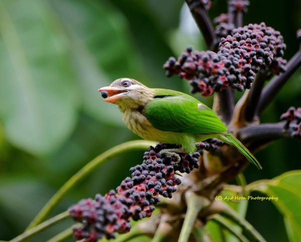 Image of Bird, Beak, Plant etc.