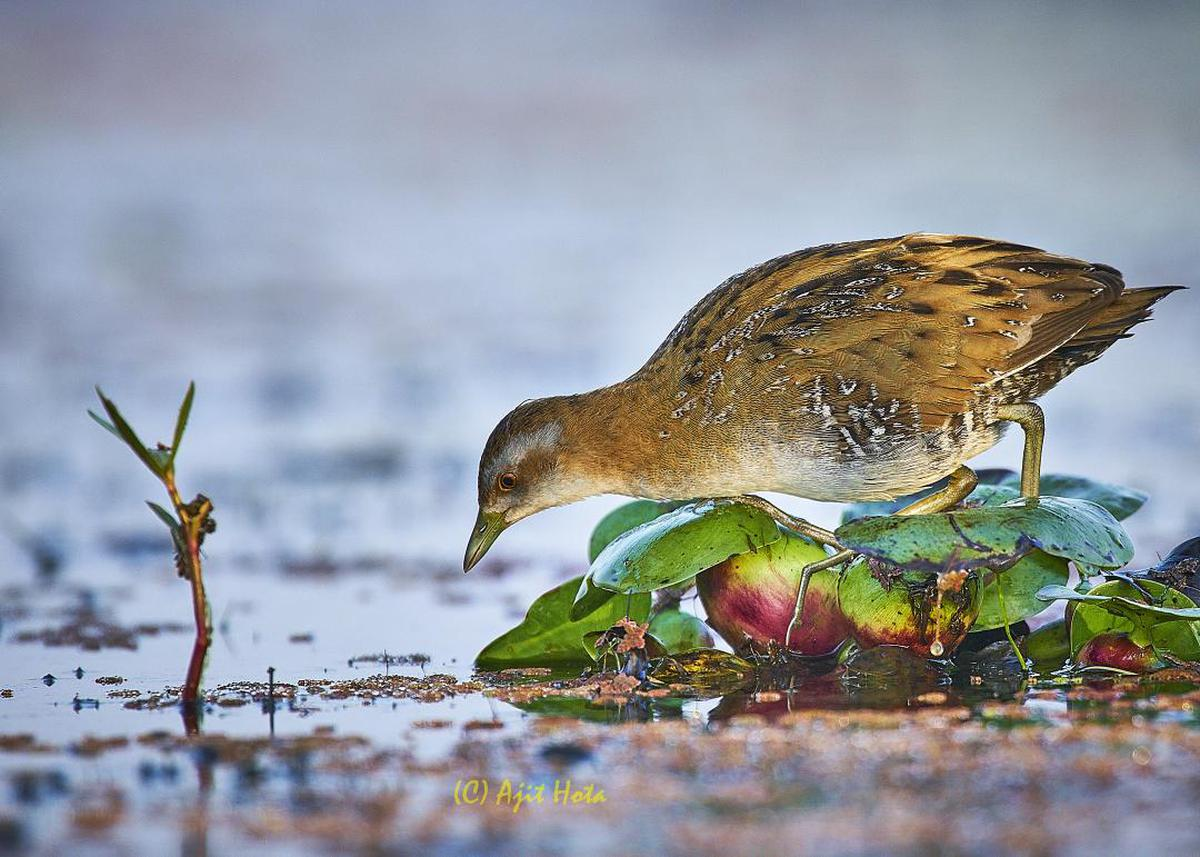 Image of Bird, Beak, Wildlife etc.