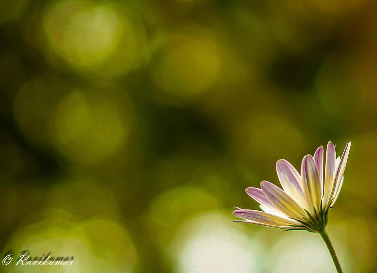 Image of Nature, Flower, Green, Petal, Macro photography, Plant etc.