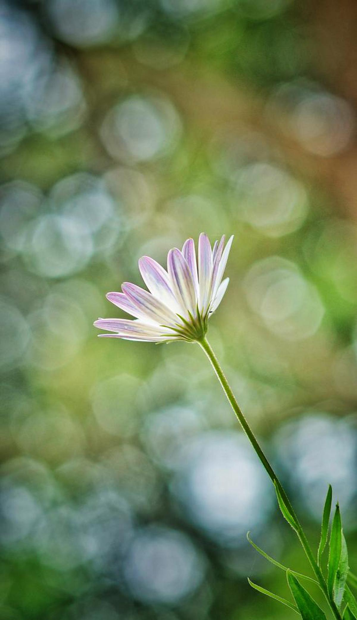 Image of Flower, Flowering plant, Green, Plant, Petal, Close-up etc.