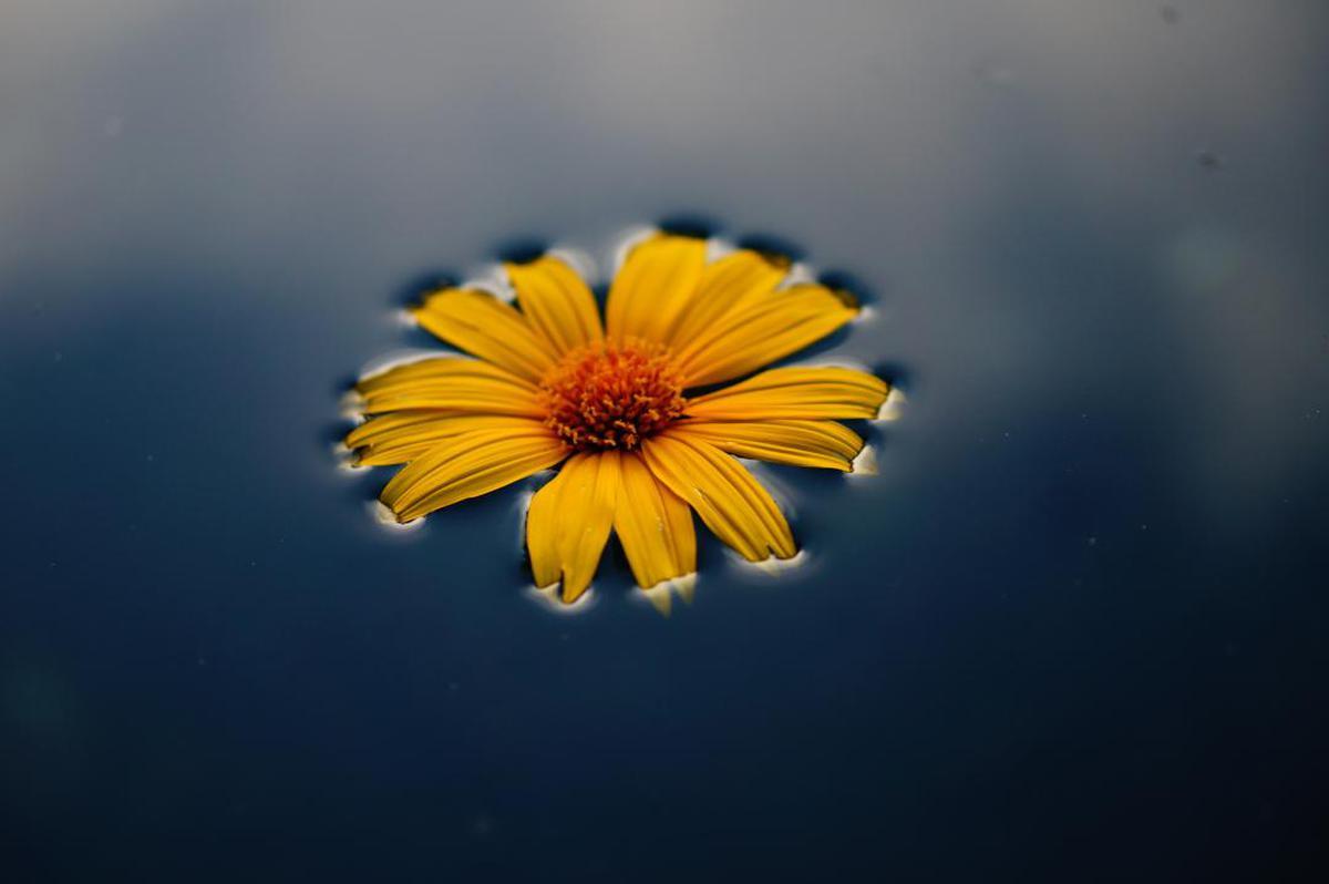 Image of Flower, Yellow, Petal, Blue, Plant, Sky etc.