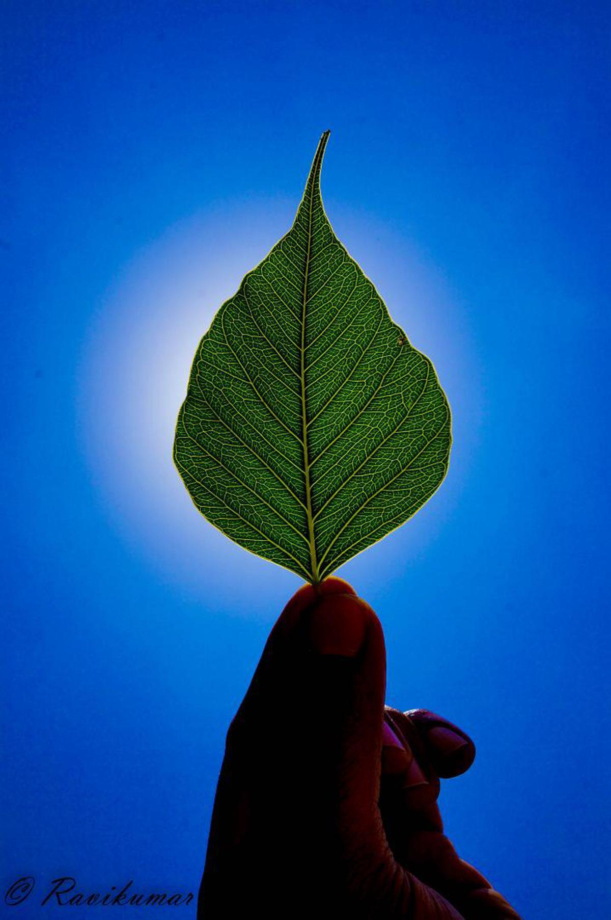 Image of Leaf, Green, Plant, Sky, Flower etc.