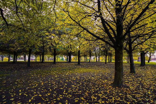Image of Tree, People in nature, Nature, Leaf, Yellow, Natural landscape etc.