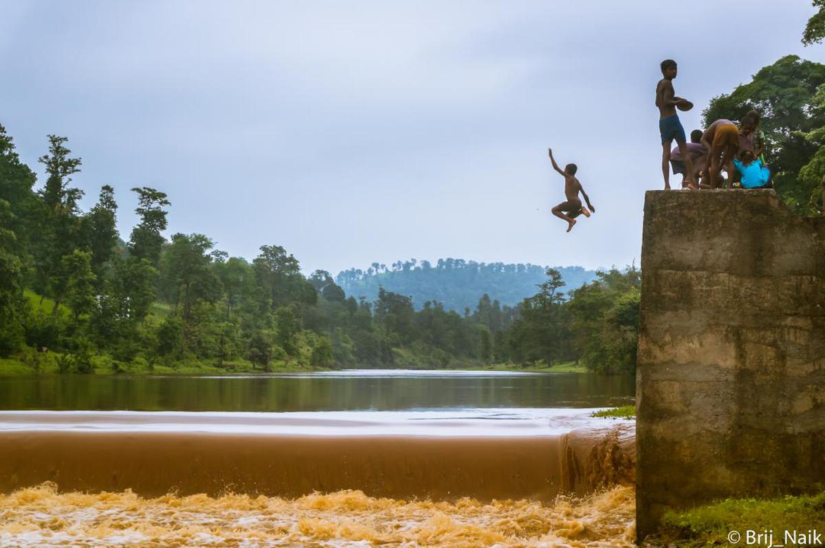 Image of Water, Jumping, Water resources, Tree, Sky etc.