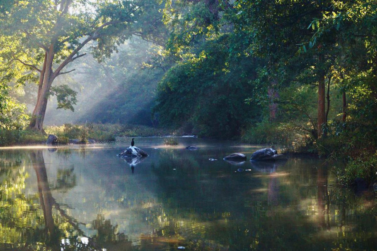 Image of Natural landscape, Nature, Nature reserve, Atmospheric phenomenon, Bayou, Natural environment etc.