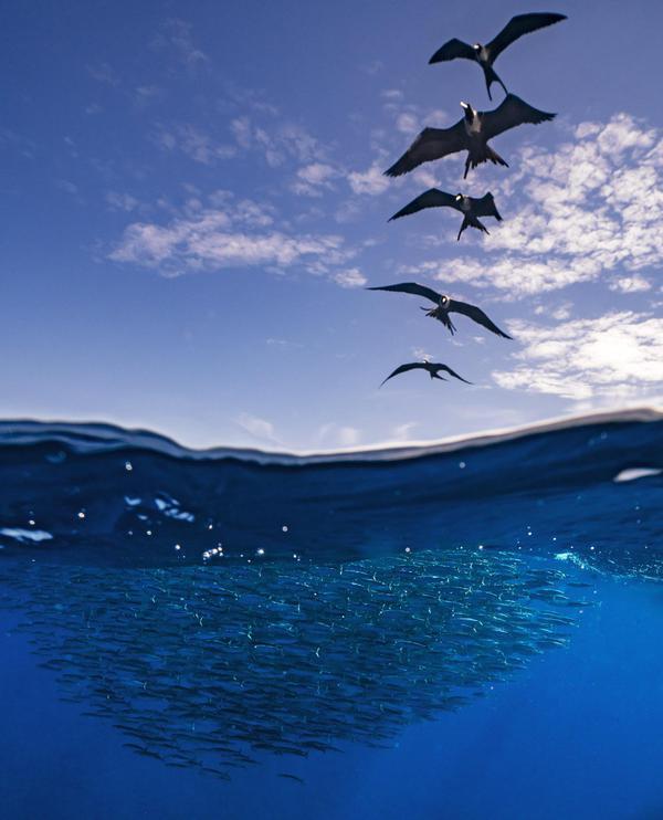 Image of Blue, Sky, Water, Ocean, Sea, Reflection etc.