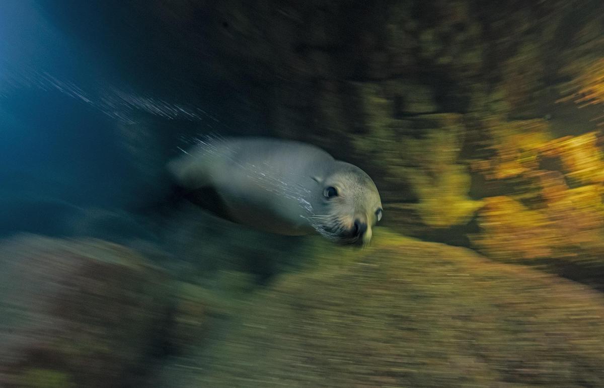 Image of Marine mammal, Organism etc.