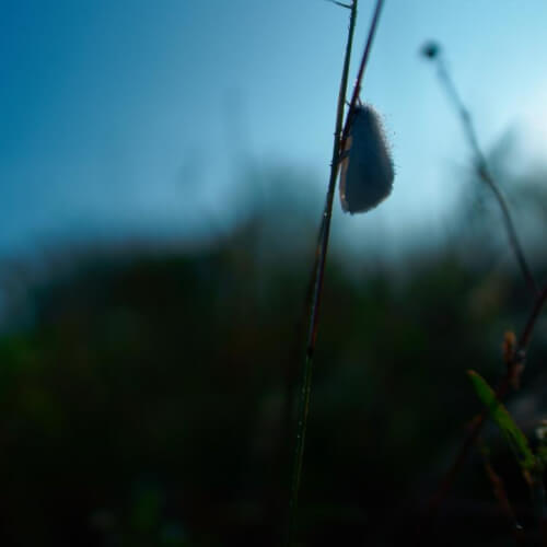 moth_1.jpg