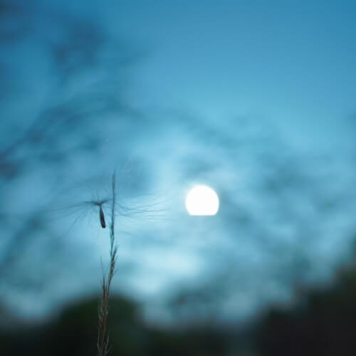 seed_wind.jpg