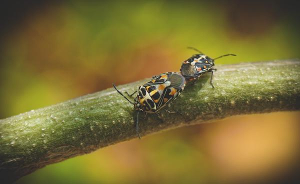 Image of Insect, Macro photography, Invertebrate, Pest, Close-up etc.