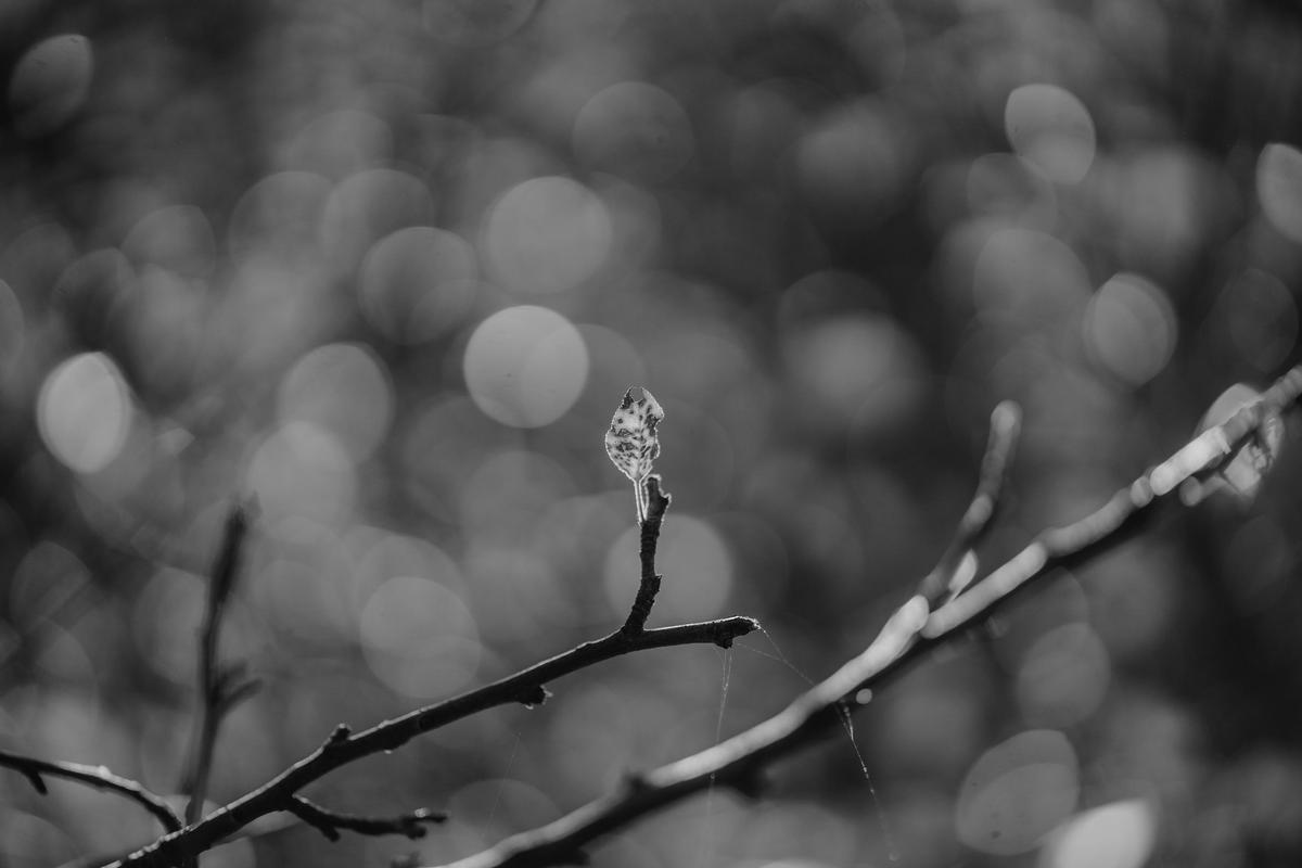 Image of Branch, Monochrome photography, Black-and-white, Black, Monochrome, Nature etc.