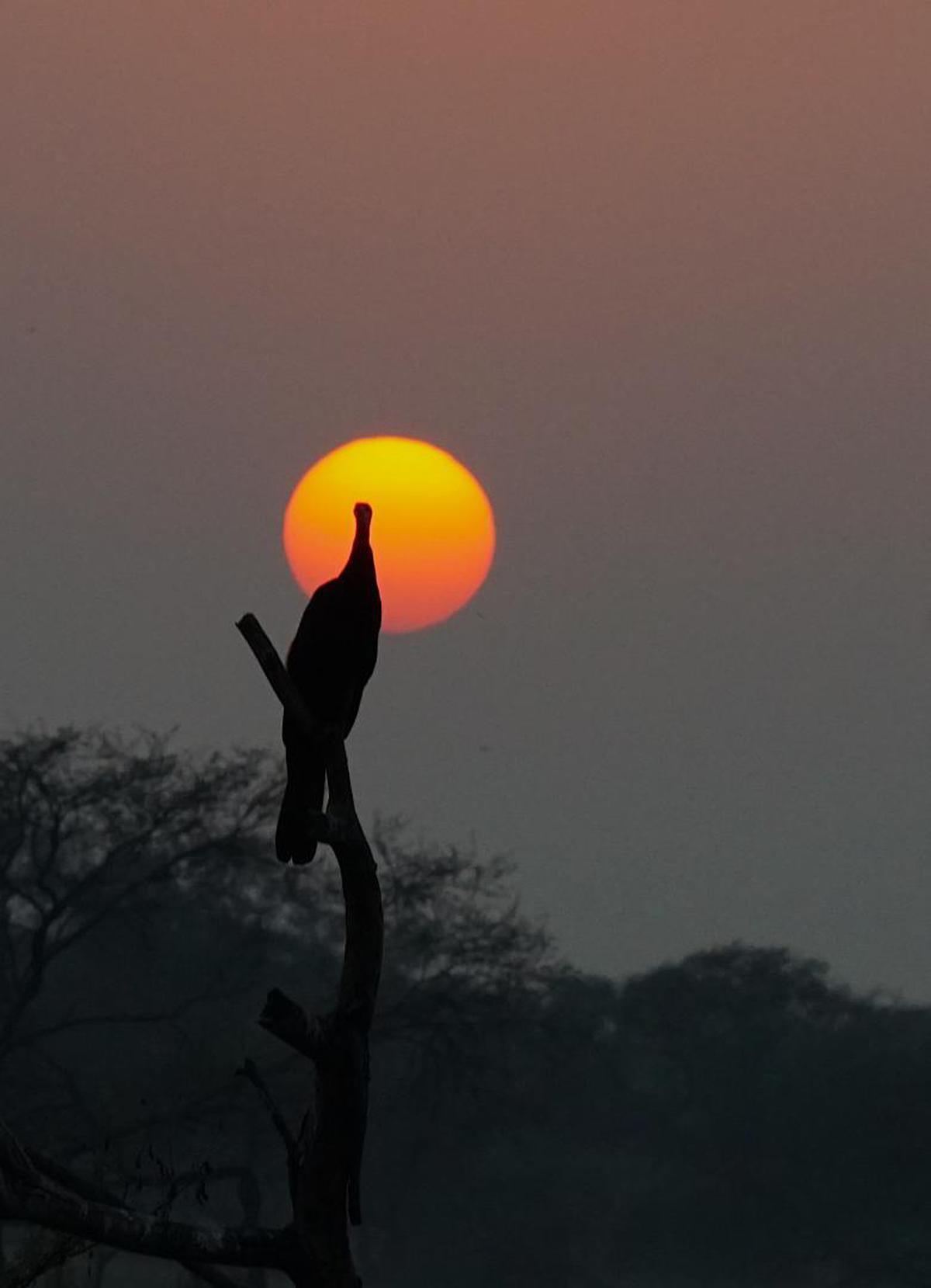 Image of Sky, Sunset, Sun, Horizon, Sunrise, Morning etc.