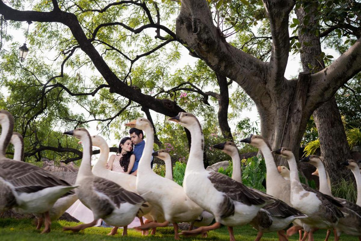 Image of Bird, Duck, Goose, Water bird, Ducks, geese and swans, Tree etc.