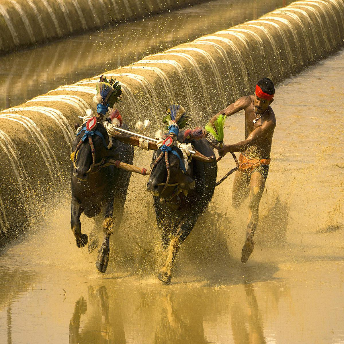 Image of Horse, Rein, Horse racing, Bridle, Water etc.