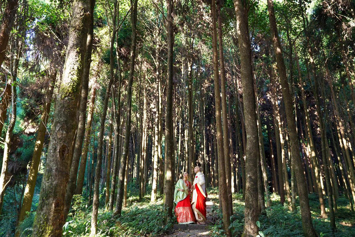 Image of Tree, People in nature, Forest, Natural environment, Grove, Woodland etc.