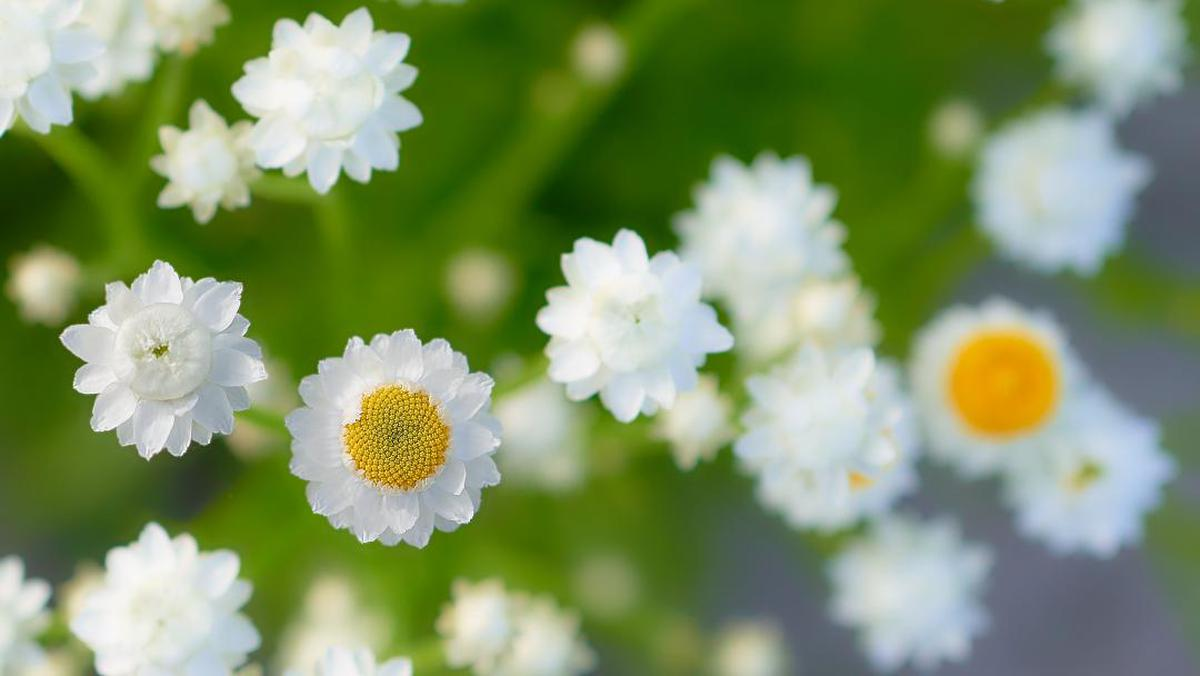 Image of Yellow, Spring, Close-up, Plant, Petal, White etc.