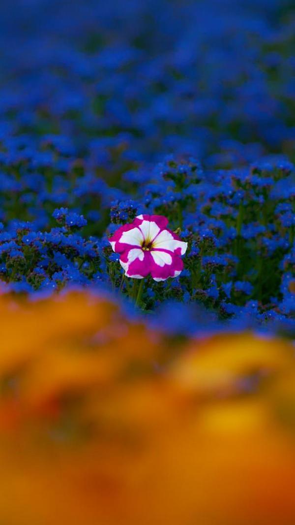 Image of Flowering plant, Purple, Plant, Sky, Petal, Nature etc.