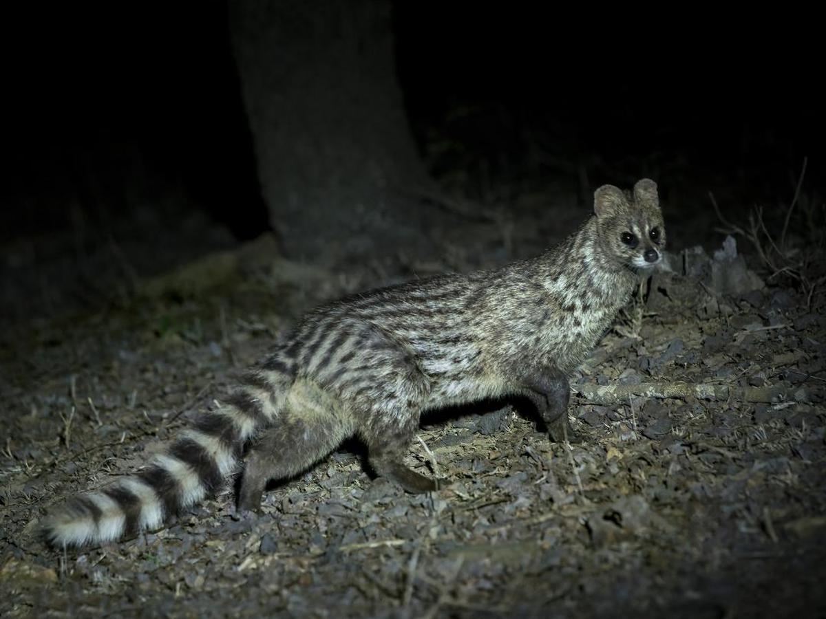 Image of Vertebrate, Wildlife, Terrestrial animal, Felidae etc.
