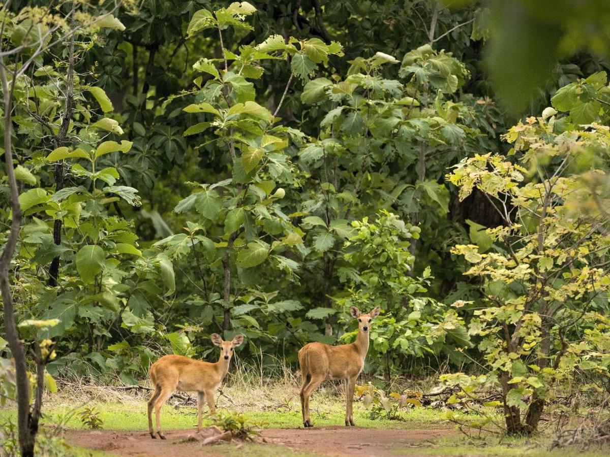 Image of Wildlife, Vegetation, Nature reserve, Tree, Deer, Biome etc.