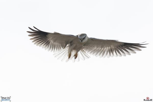 Image of Grey, Neck, Iris, Flight, Beak, Feather etc.