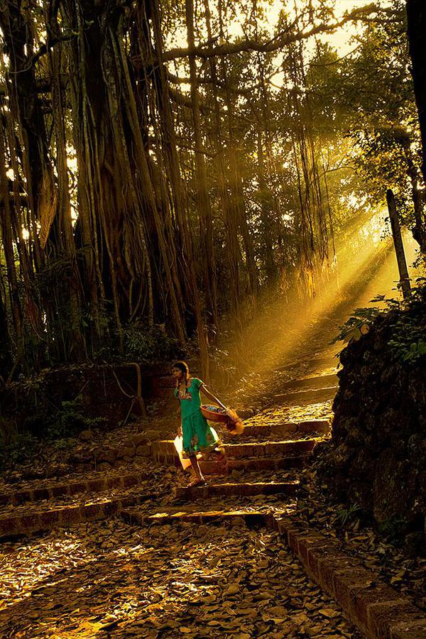 Image of People in nature, Nature, Tree, Sunlight, Woodland, Natural landscape etc.