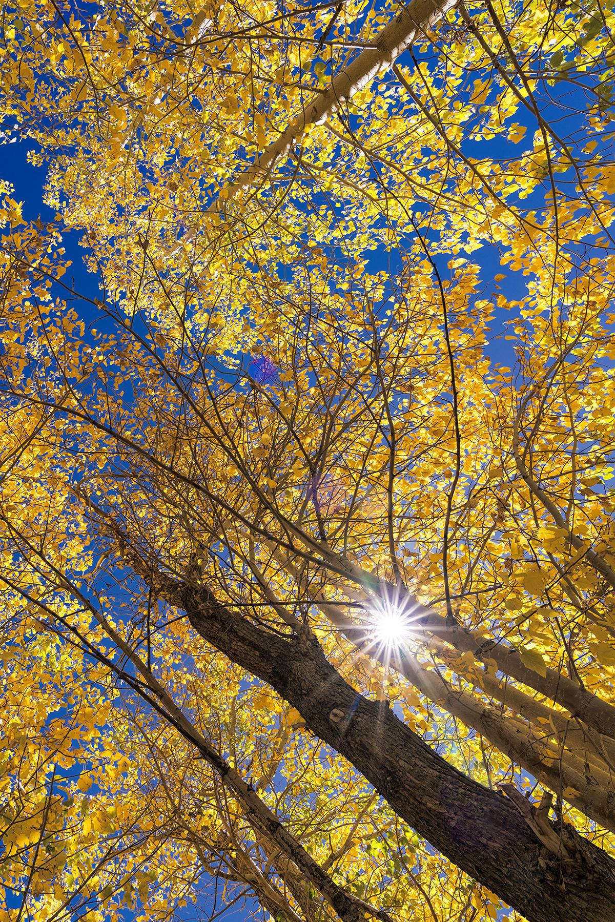 Image of Tree, Nature, Yellow, Branch, Woody plant, Deciduous etc.