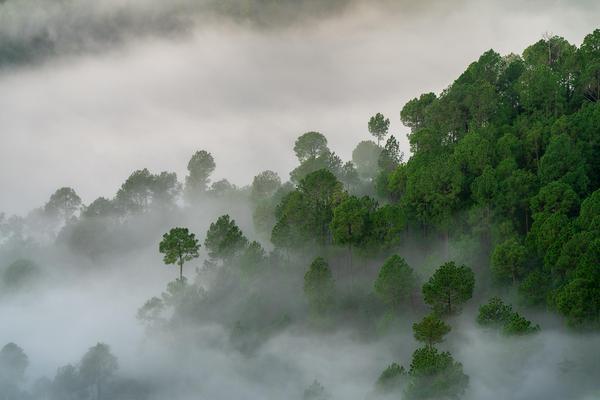 Image of Biome, Atmospheric phenomenon, Water, Tree, Natural landscape, Sky etc.