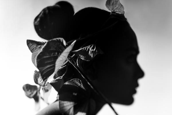 Image of Shadow, Photography, Still life photography, Leaf, Monochrome, Black-and-white etc.
