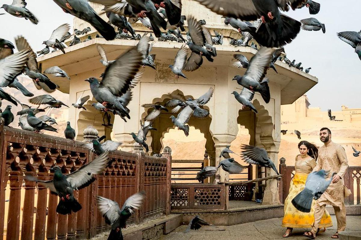 Image of Bird, Pigeons and doves, Couple, Flying etc.