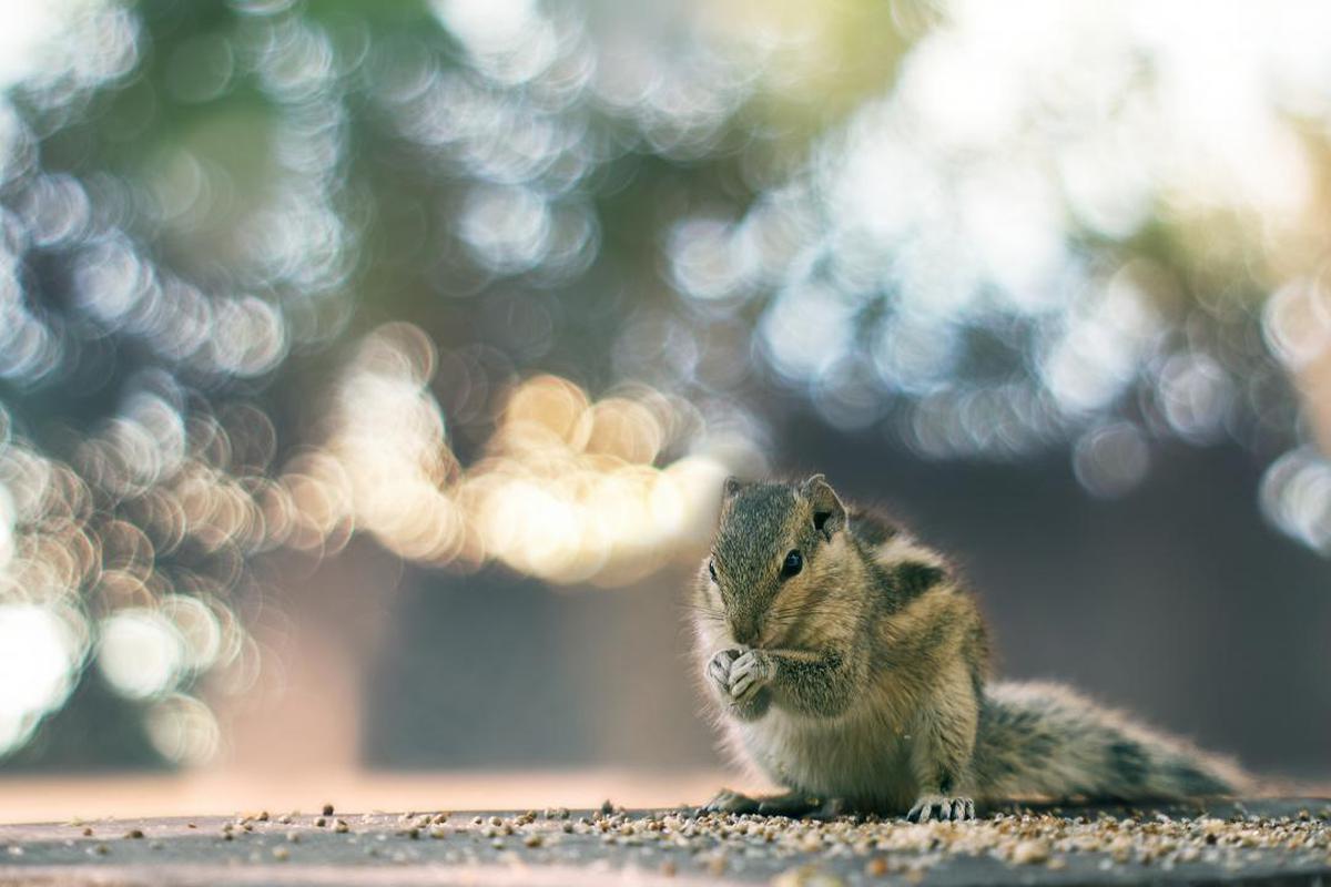Image of Squirrel, Wildlife, Rodent, Chipmunk, Snout, Sky etc.