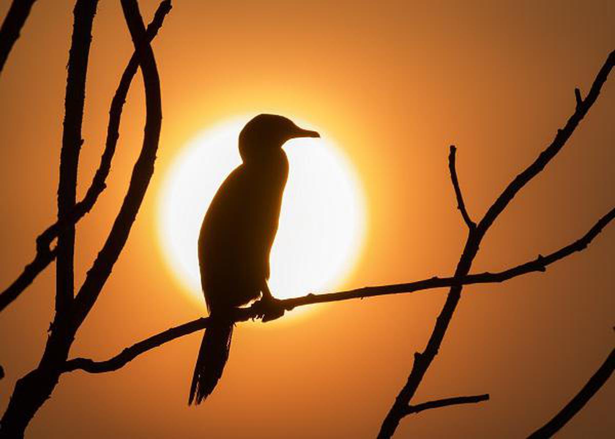 Image of Bird, Branch, Beak, Silhouette, Sky etc.